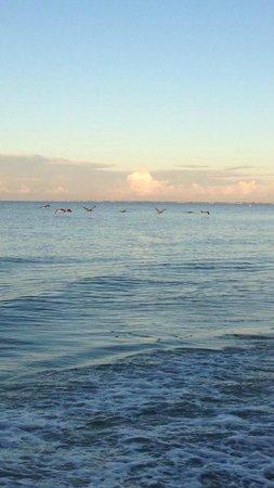 Sandpiper Gulf Resort: Pelican Flyover