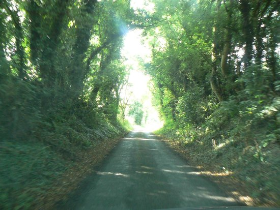 Ross House Equestrian Holidays: Lovely lanes for riding on.