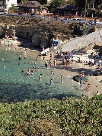 La Jolla Cove: Snorkeling/dciving Cove