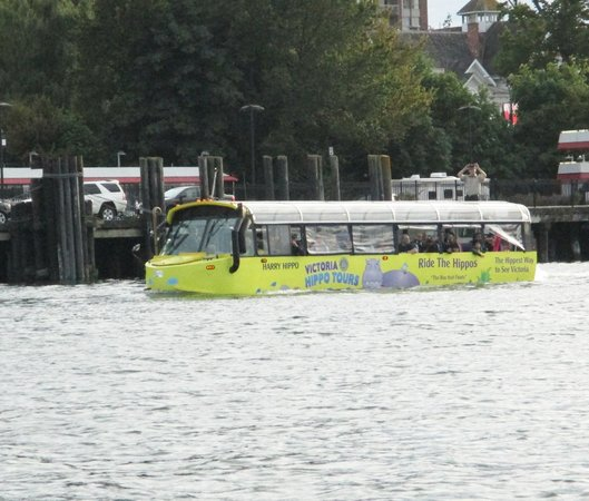 Victoria Hippo Tours : One of the Hippo buses on the water in the Inner Harbor.