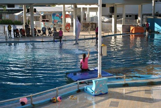 Resorts World Sentosa: Pink dolphins