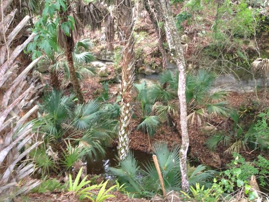 Enchanted Forest Sanctuary: Palm forest at canal