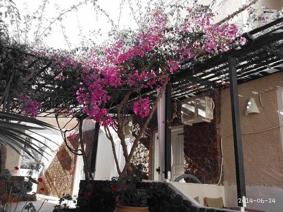 Arion Bay Hotel: die Pflanzen sind einfach wunderschön