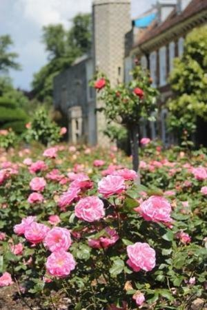 Bexley, UK: Hall Place & Gardens, the Rose Garden