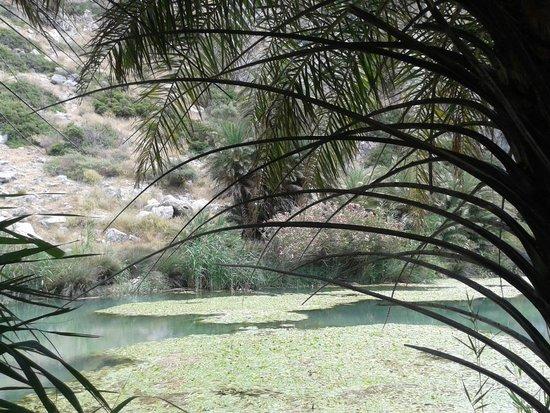 Finikas Beach (Palm Beach) : Il Palmeto Di Preveli Palm Beach 5