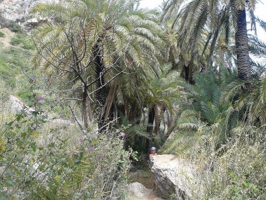 Finikas Beach (Palm Beach): Il Palmeto Di Preveli Palm Beach 4