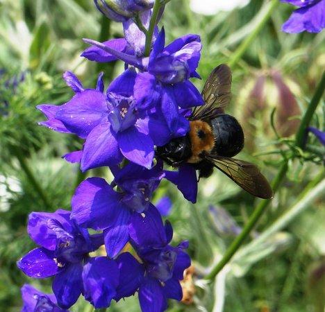 Morris Arboretum: Lots of bees at work