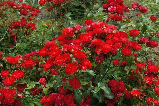 Morris Arboretum: Many flowers in bloom in June