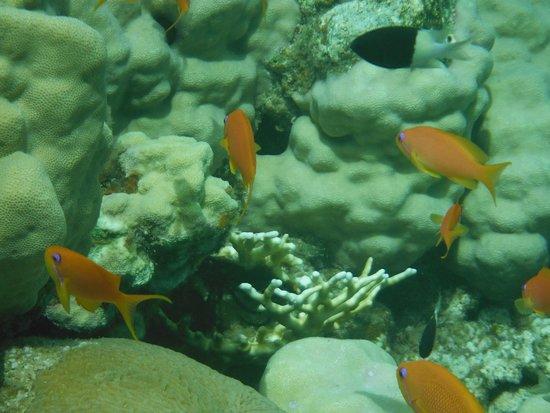 Miramar Resort Taba Heights: rafa koralowa
