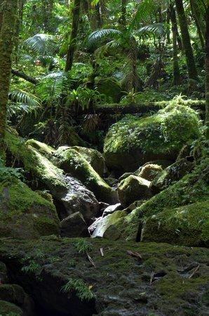 Island Walkers - El Yunque: El Yunque