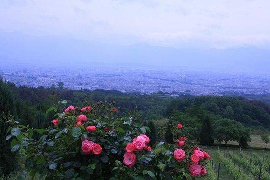 Suntory Tominooka Winery : 葡萄畑とバラ