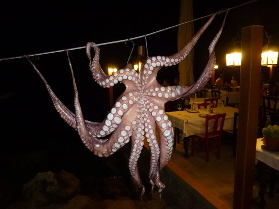 Amoudi Bay : Octopus