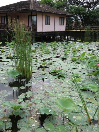 ViewPoint Lodge & Fine Cuisines: The lotus pond