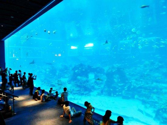 Marine Life Park: 07
