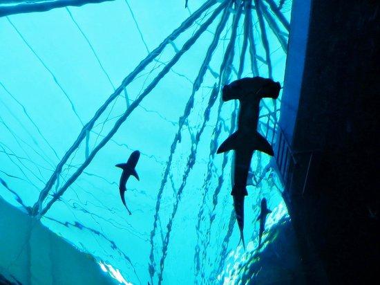 Marine Life Park: 09