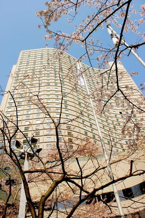 Hilton Tokyo: Cherry Blossoms Near the Hotel