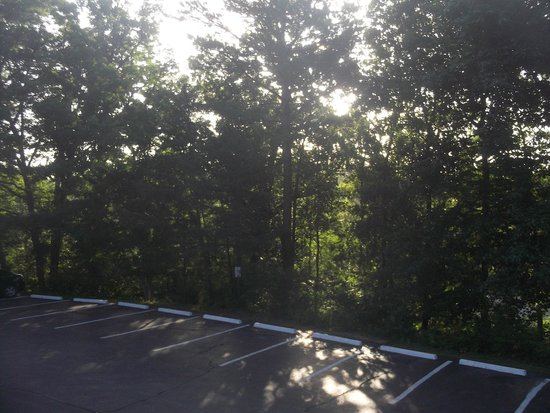 Days Inn Eureka Springs: another parking lot view surrounded by trees
