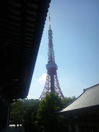 Zojoji Temple : 本殿から東京タワー