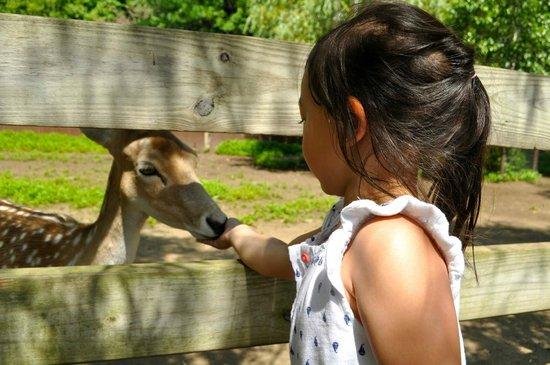 York's Wild Kingdom Zoo and Fun Park : Deer feeding