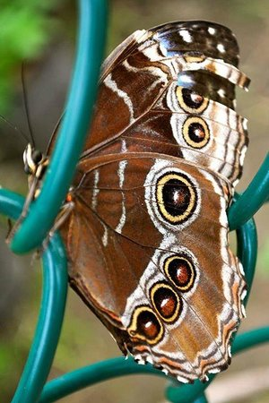 York's Wild Kingdom Zoo and Fun Park : Butterfly sanctuary