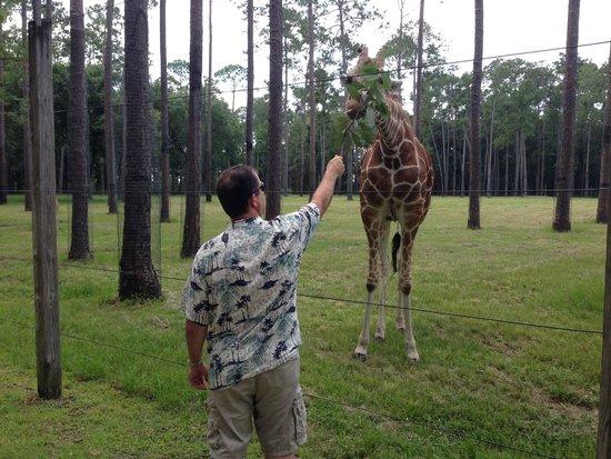 White Oak Conservation Center: Feeding the Giraffes
