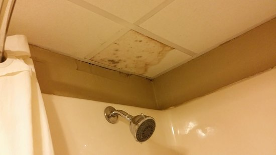 Inn of Rockwall: Another view of mold in shower