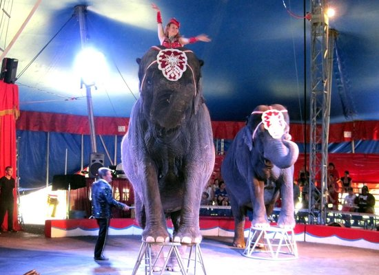 Circus World: Elephants under the Big Top