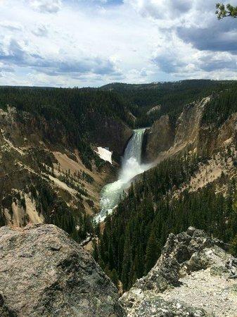 Jackson Hole Wildlife Safaris - Day Tours: Yellowstone