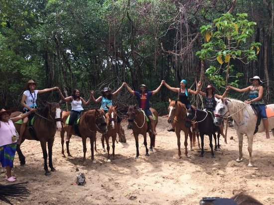 Being with Horses: At the wetland mangroves