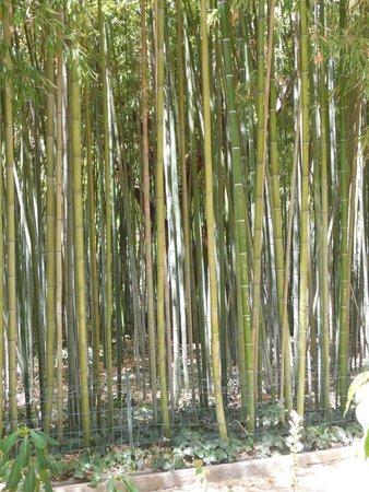 Jardin des Plantes: The Bamboo Plantation