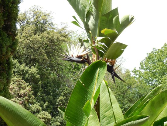Jardin des plantes : Black bird of paradise?