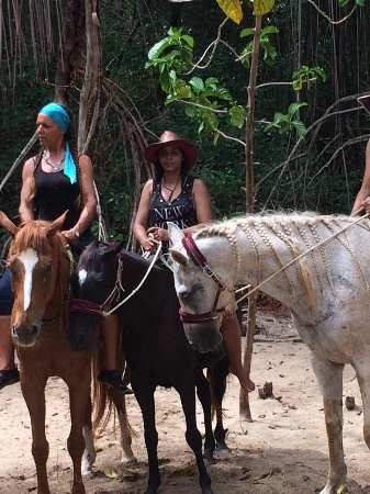 Being with Horses: Veronica teaching is to assemble at the wetland mangroves