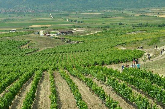Villa Yustina Winery