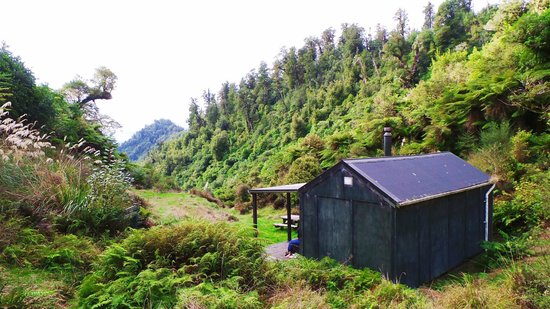 Hiking New Zealand - Day Tours: Whirinaki Forest!