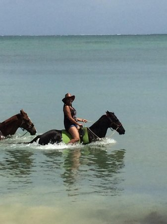 Being with Horses: Swimming with the horses