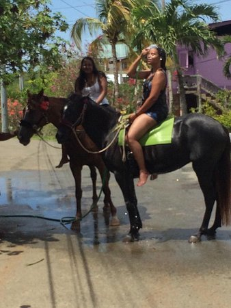 Being with Horses: Cooling down after a beautiful ride and swim