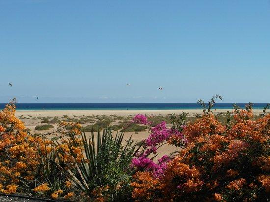 Melia Gorriones Fuerteventura : plaża