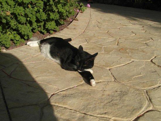 Melia Gorriones Fuerteventura : chilloutowy kot ;-)