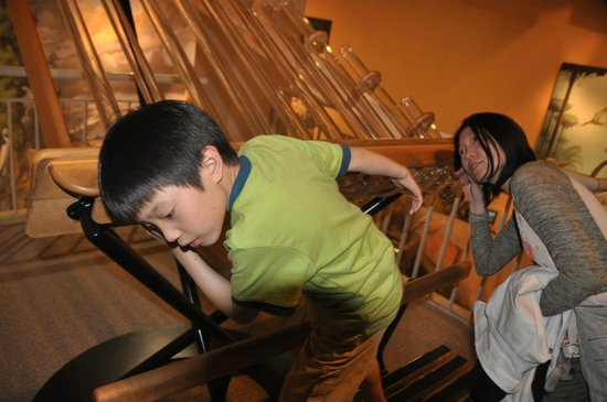 Fernbank Museum of Natural History: Sensor and touch exhibition