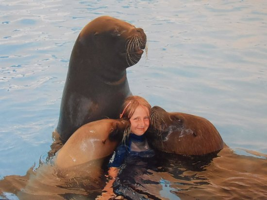 Aquashow Park: swimming with sealions