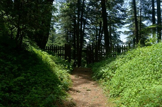 Wildflower Hall, Shimla in the Himalayas: Nature trail through the mountains and pine forest