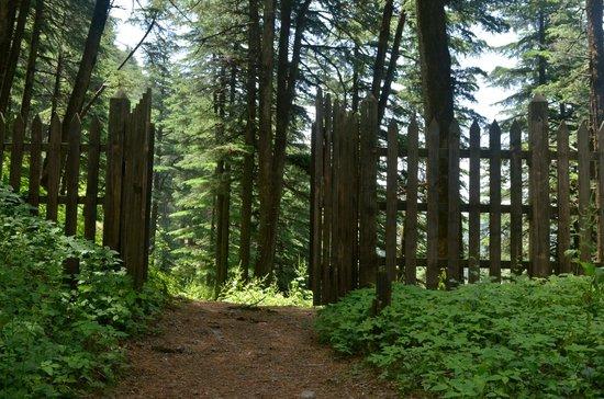 Wildflower Hall, Shimla in the Himalayas: Trail
