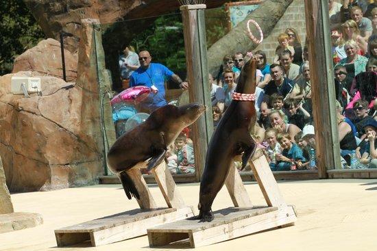 Blackpool Zoo: Seal Lions