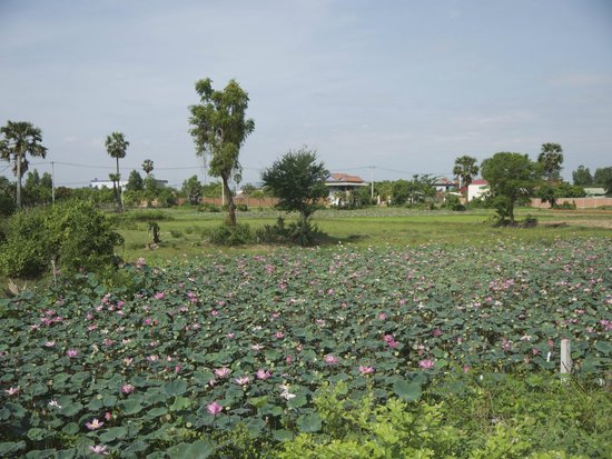 Grasshopper Adventures Day Tours by Bicycle: Lotus Fields