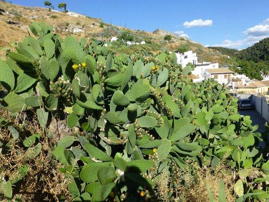 Play Granada : Cactusplants on the hill