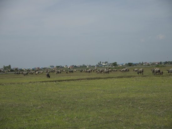 Grasshopper Adventures Day Tours by Bicycle: Buffaloes