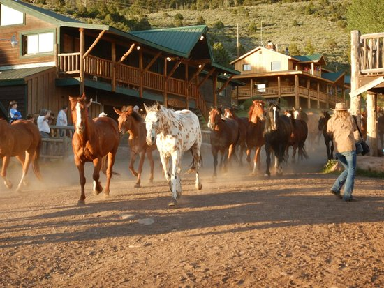 Black Mountain Ranch: Evening Stampede