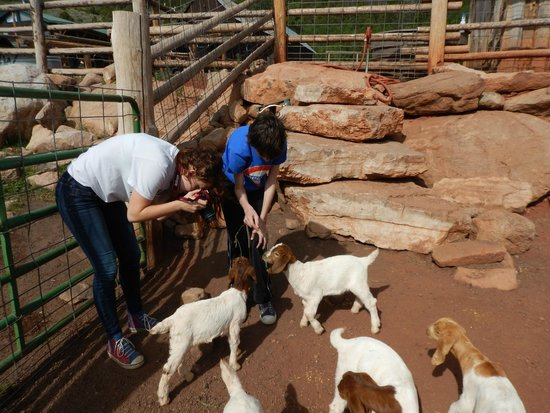 Black Mountain Ranch : Baby goats!
