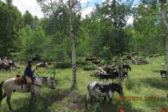 Black Mountain Ranch: Cattle drive