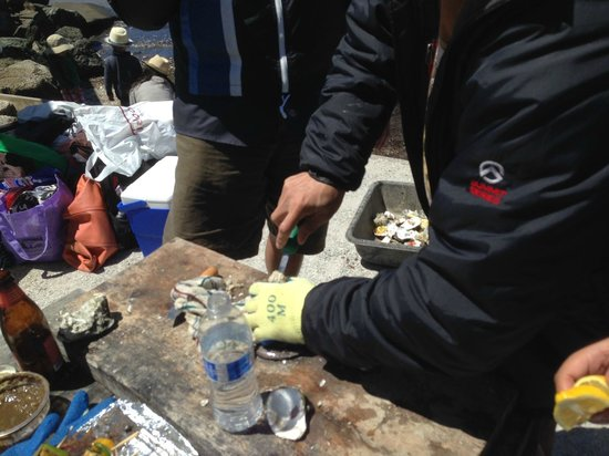 Tomales Bay Oyster Co.: Using glove to shuck. See gray bin in back to collect shells only